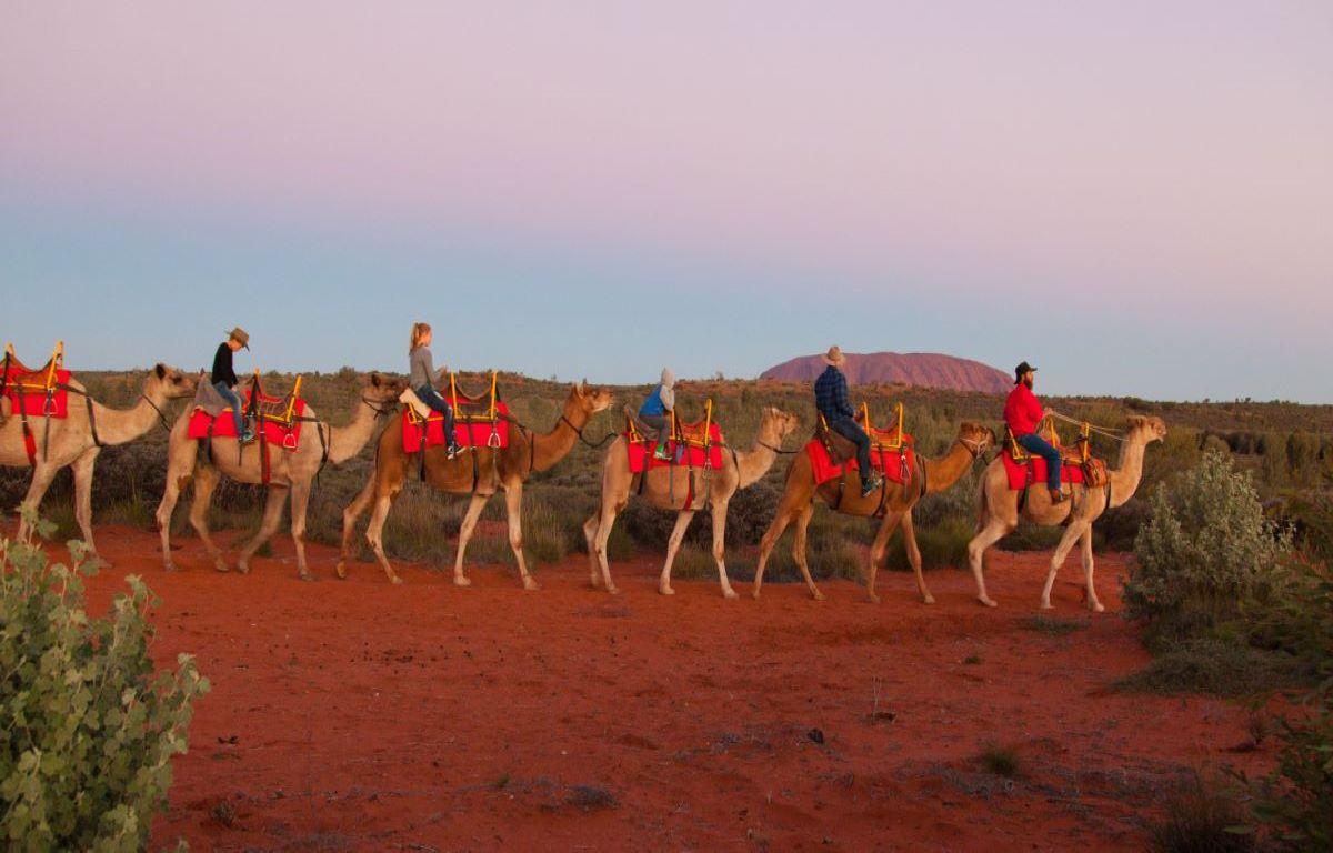 A_camel_train_near_Uluru